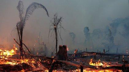 Nueva oleada de incendios y deforestación en el Amazonas en plena pandemia