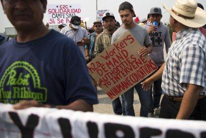 """Jornaleros """"legales"""" despedidos por exigir mejores condiciones laborales"""