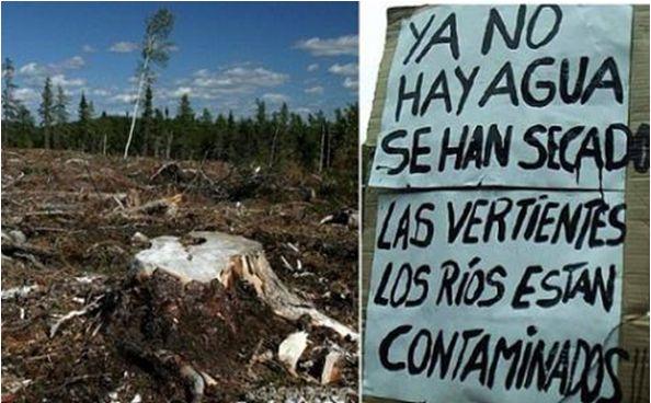 El lucrativo negocio forestal tras el odio racial contra el pueblo mapuche que trajo pobreza y sequía al Wallmapu